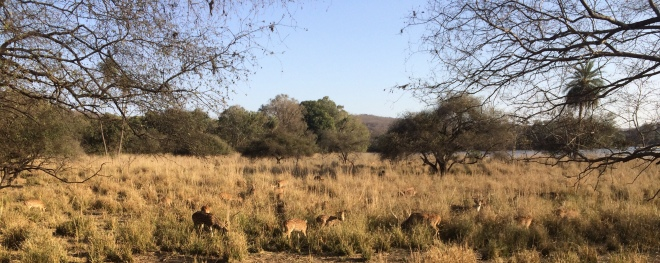 A herd of spotted deer